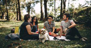 Camping Zelt mit Hund